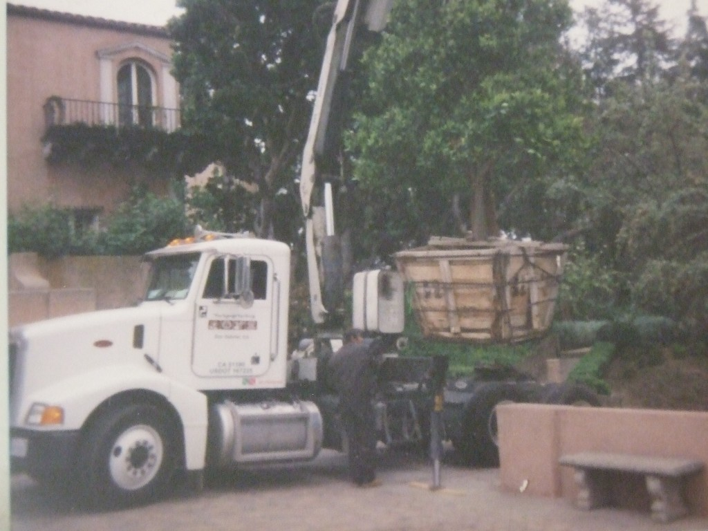 Tree Removal, Install and Maintenance is just a small part of our services